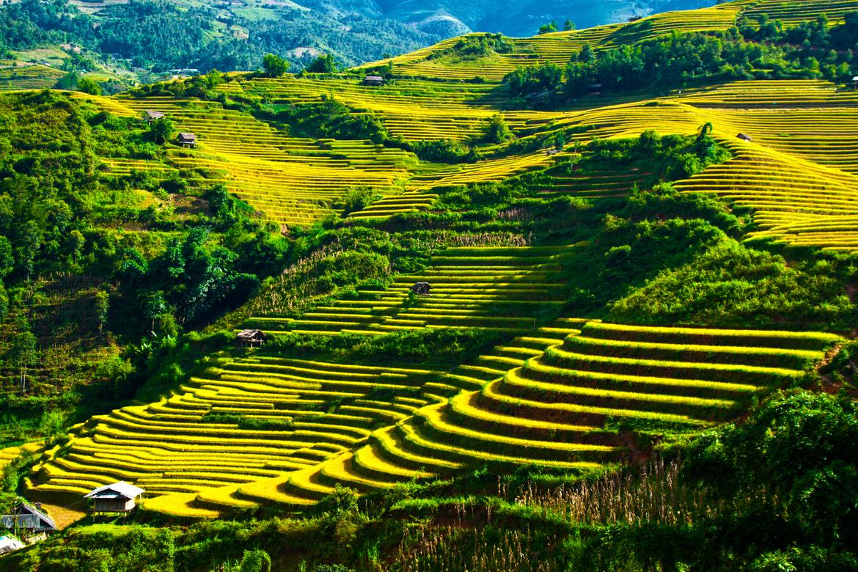 Tây Bắc cung bậc cảm xúc màu xanh của cánh đồng ruộng bậc thang nổi tiếng