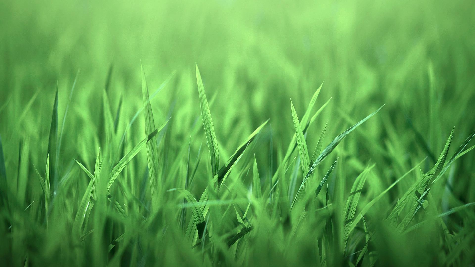 Phông thảm cỏ xanh lá tươi mát