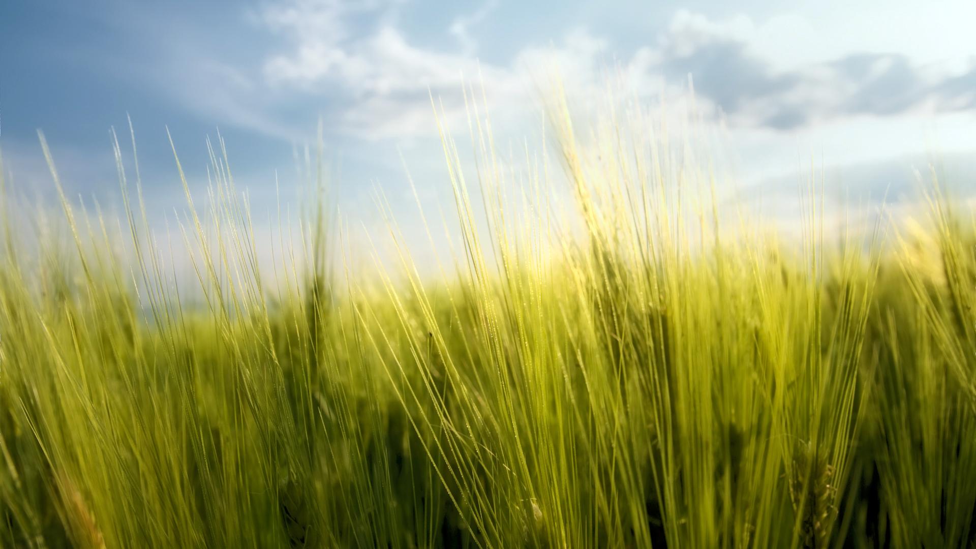 Phông nền cánh đồng cỏ xanh lá huyền diệu