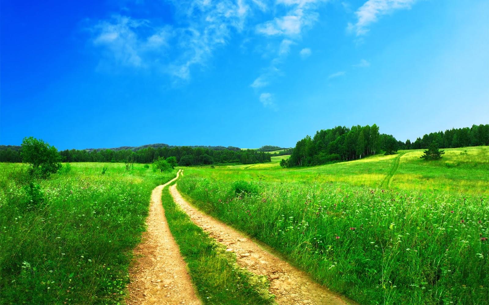 Background nền xanh hòa quyện màu nền xanh lá cây với con đường tạo điểm nhấn cho bức ảnh