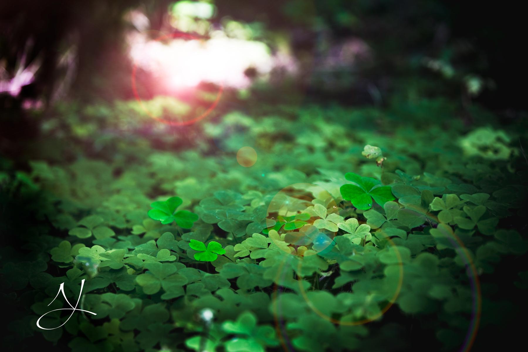 Cỏ xanh tạo thảm phông nền xanh lá tuyệt đẹp