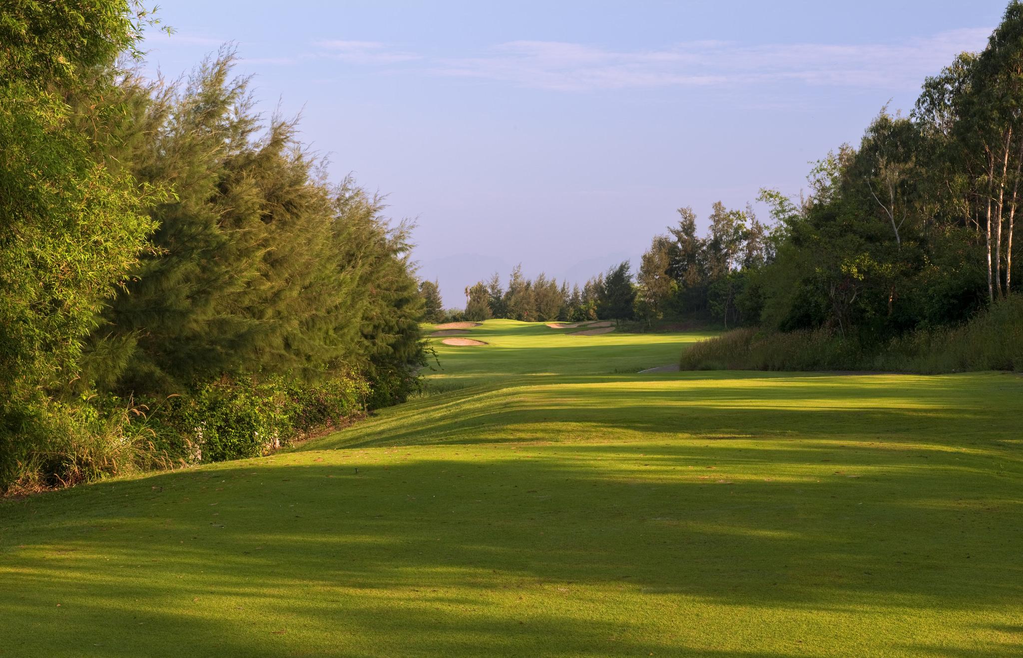 Background green cây cỏ đẹp hiện đại