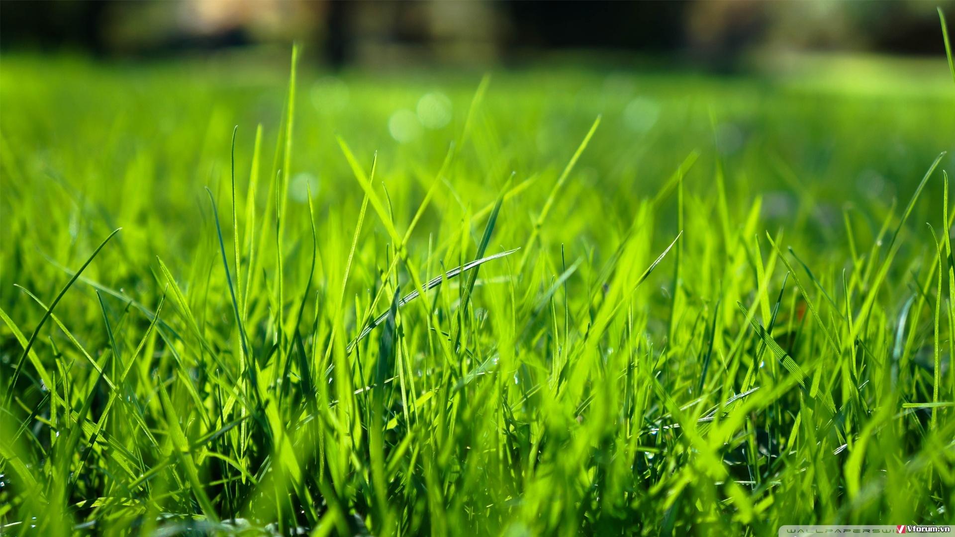Phông ảnh Cánh đồng cỏ màu xanh lá cây